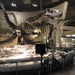 Matterportで上野にある国立科学博物館の撮影を行いました